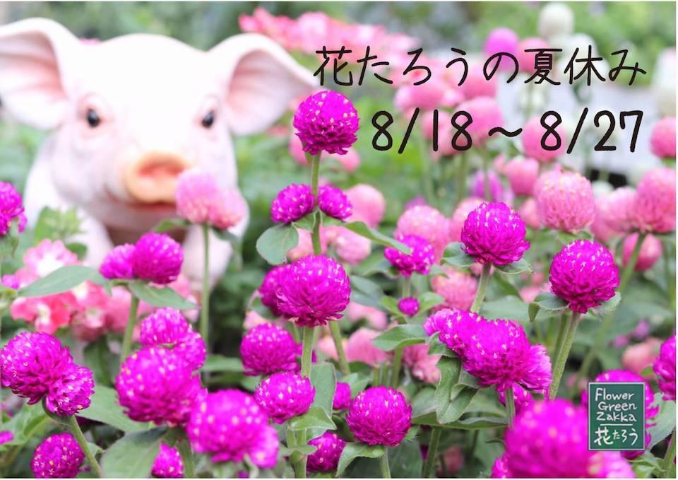 花たろうの夏休み